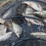 Prevenirea și combaterea braconajului piscicol în atenţia polițiștilor din Vălenii de Munte