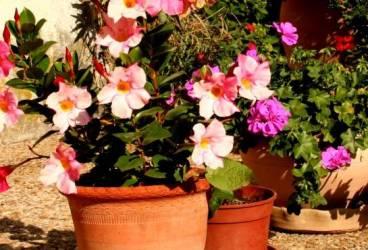 Prinse la Hale, când vindeau ghivece cu flori furate