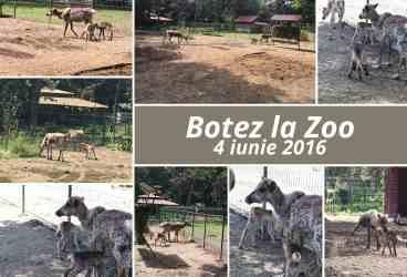 Cei mai tineri membri ai Zoo Ploieşti, doi pui de ren, îşi caută naşi