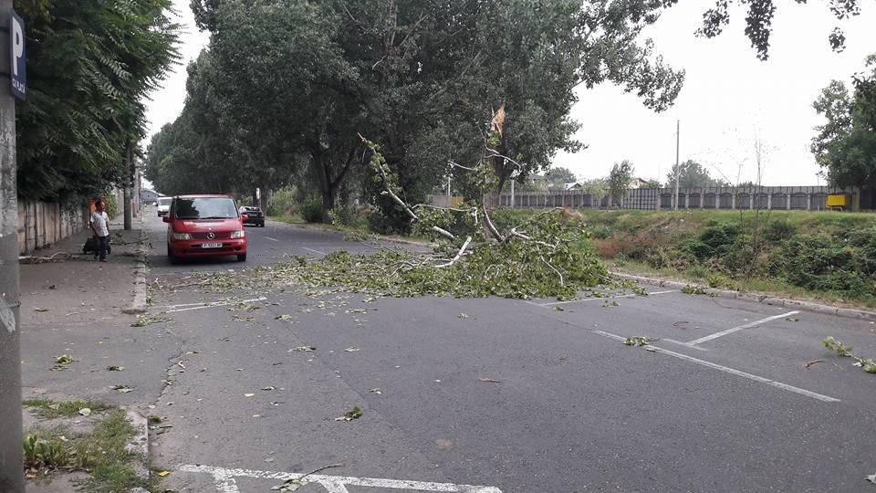 Trafic blocat pe DN1D, la Albeşti. Un copac a căzut pe carosabil