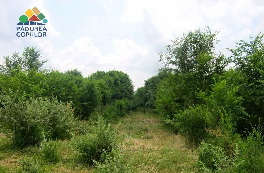Pădure nouă, la marginea Ploieştiului