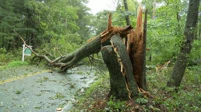 Copaci căzuţi pe carosabil sau reţelele electrice la Sinaia, Măneciu, Posești, Izvoarele, Teișani și Vărbilău