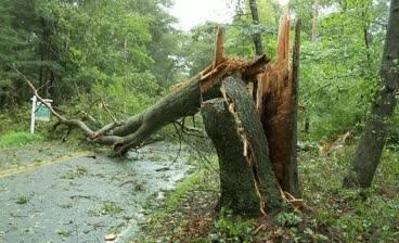 Copac căzut pe carosabil pe DN1D