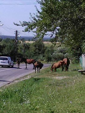 Pericol de accidente pe un drum judeţean din Prahova. E nevoie de intervenţia poliţiei