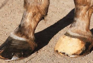 """Caii """"texanilor"""" din Cina săltaţi de Poliţia Locală"""
