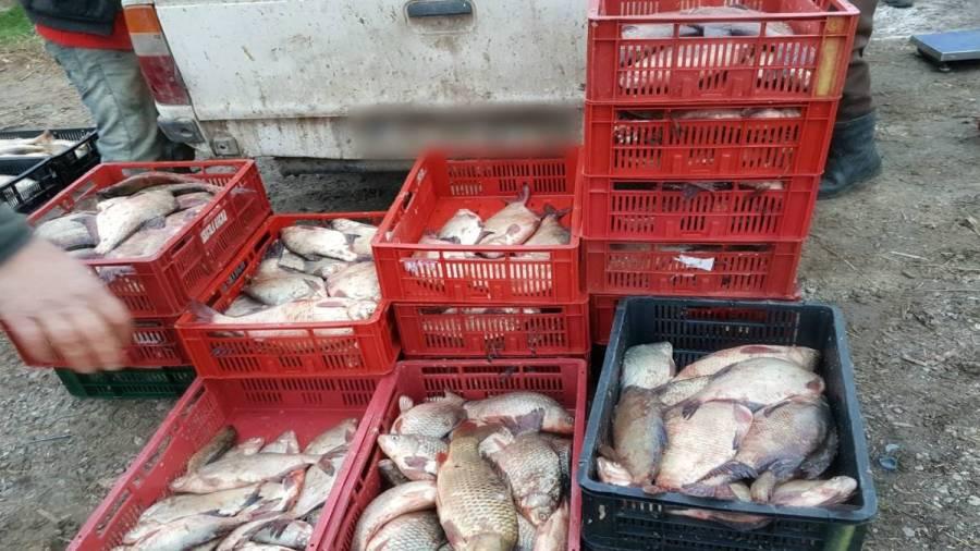 """155 kg de peşte confiscat de la vânzarea pe """"botul"""" maşinii"""