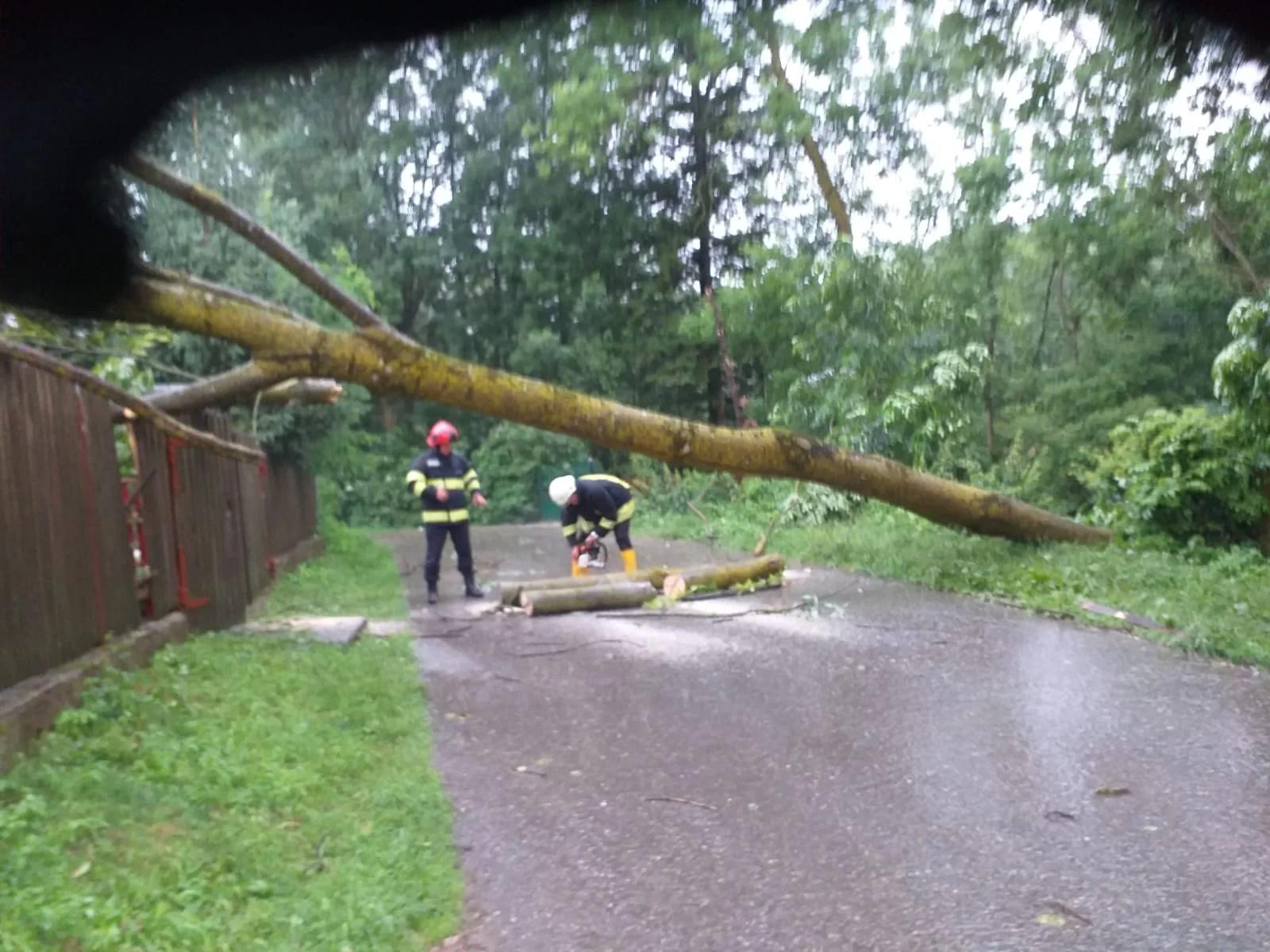 Copac căzut pe o casă la provița de Sus
