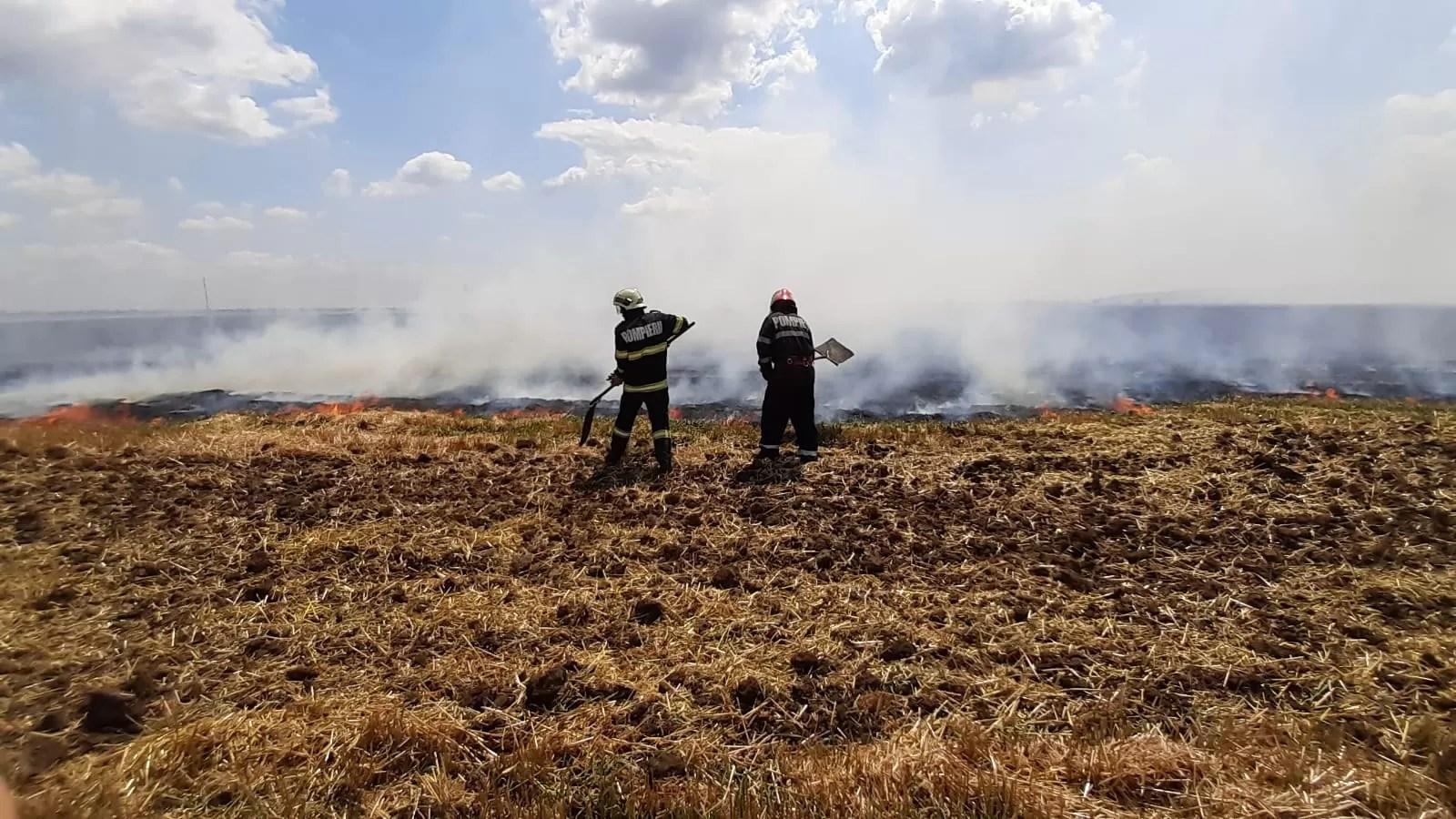 4 hectare de grâu, mistuite în incendiu la Strejnicu