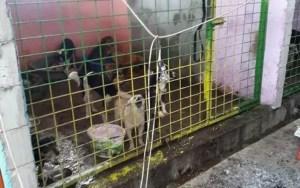 Târg de adopții canine, la Sărăcești