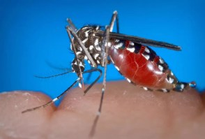 Oltean omorât de virusul West Nile