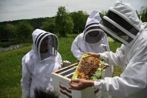 Ajutor pentru apicultorii olteni. 25 de lei pentru familia de albine