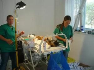Sterilizare gratuită pentru patrupedele din Slatina