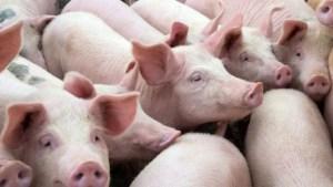 Preţul de achiziţie al cărnii de porc a crescut cu 15% faţă de anul trecut; salamul de Sibiu, mai scump cu 10% (asociaţie)