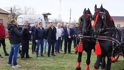 Invitat cai