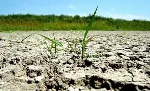 Director general ANM: 'Anul agricol 2019-2020 este afectat de secetă pedologică puternică şi extremă'