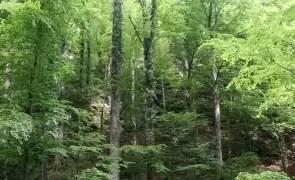 Înfiinţarea unui DNA al pădurilor ar birocratiza excesiv un sistem care funcţionează, avertizează ASFOR