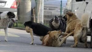 Caracal:Dezbatere publică pentru soluționarea problemei câinilor maidanezi