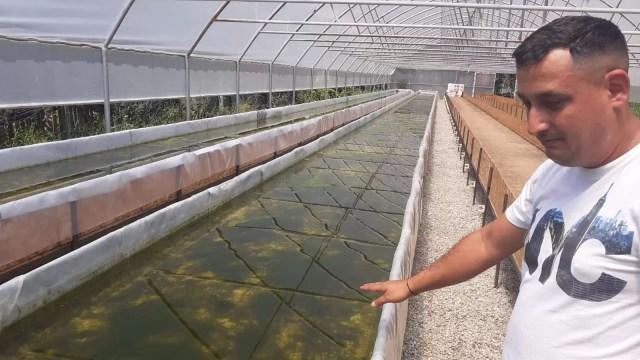 pesti2 Agricultură inovatoare la Pleșoiu
