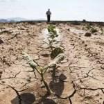 Veşti proaste pentru agricultorii din România. Seceta se va semnala în mare parte din ţară în următoarele săptămâni
