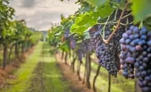 Industria vinului intră într-o nouă eră