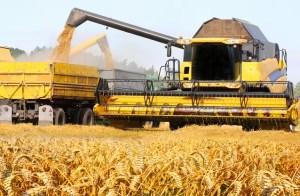 Adrian Chesnoiu: Din grânarul Europei, România a ajuns să importe porumb şi grâu de peste 540 de milioane de euro într-un singur an