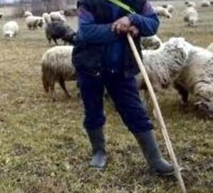 Bătaie între ciobani, la Vâlcele