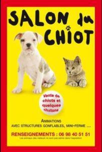 rambouillet_salon-chiot_2016-06