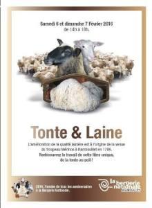 rambouillet_BN_tonte-laine_2016-02