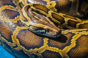 python1-630x0