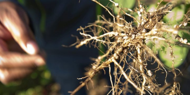 Roots hold the answers for the future of crops.