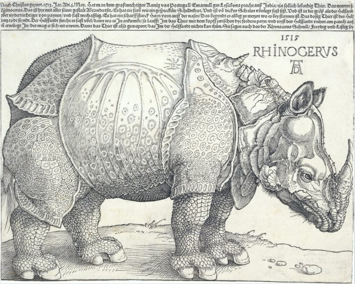 German painter and printmaker Albrecht Dürer's 1515 woodcut of a rhinoceros.