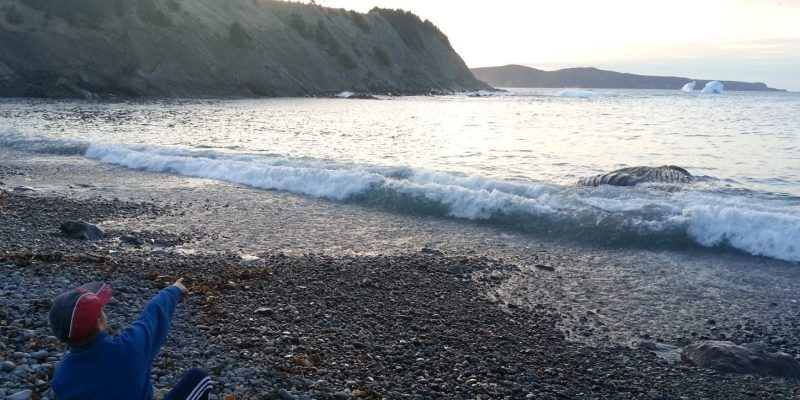 Outer Cove Beach May 2017