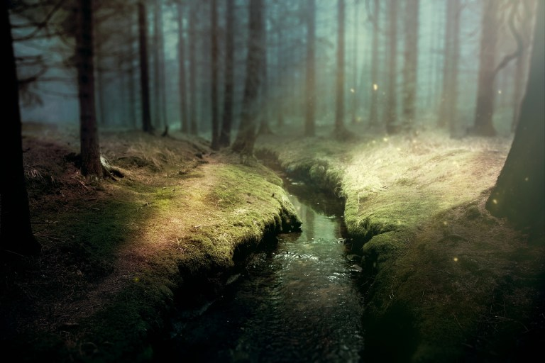 A stream bathed in sunlight in a forest.