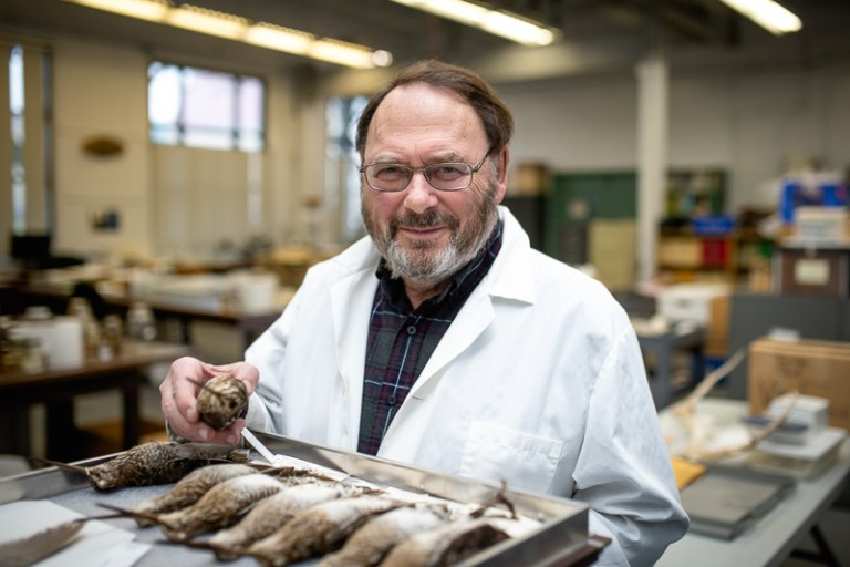 Dr. Ted Miller with a collection of snipe specimens at The Rooms in the museum division's Natural History collection.