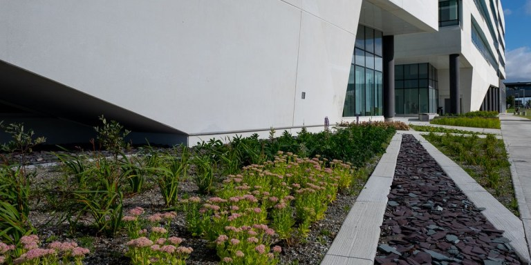 Several different kinds of plants grow low to the ground in zigzag patterns.