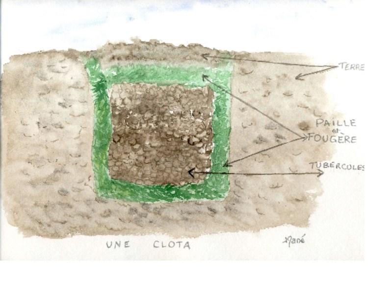 clota
