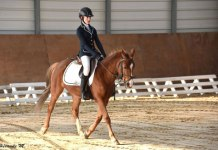 poney club amiens dressage