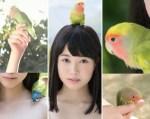 もりの小鳥(ピーちゃん)