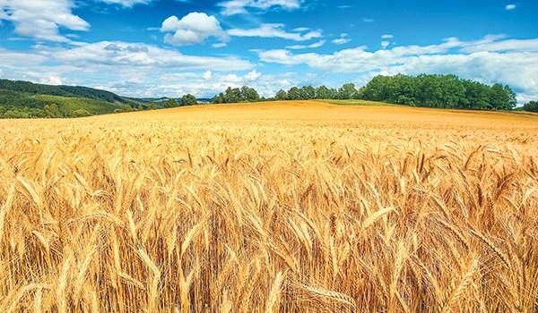 Un concetto globale per la sicurezza alimentare in Svizzera