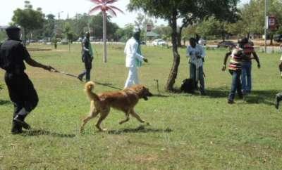 Naming Dog Buhari