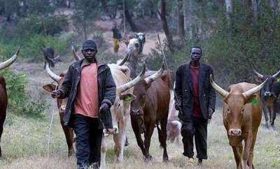 Abia Police commissioner advises herdsmen, communities not to take law into their hands