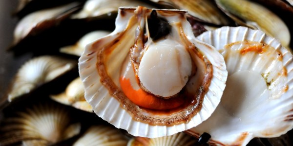 Scallop Recipes: Carpaccio, Scallop Pops - Great British Chefs