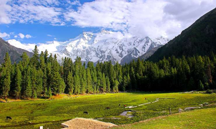 Nanga Parbat seen from Fairy Meadows, Diamer. — Photo by M. Awais