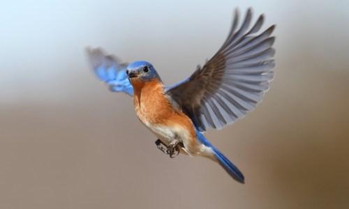 bird story transferring responsibility to the jury