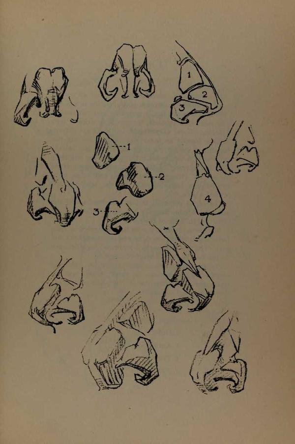 anatomia-constructiva-george-bridgman-narices