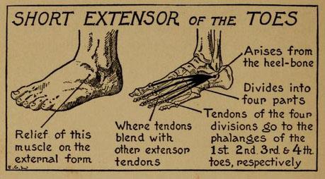 practical-art-anatomy-detail3