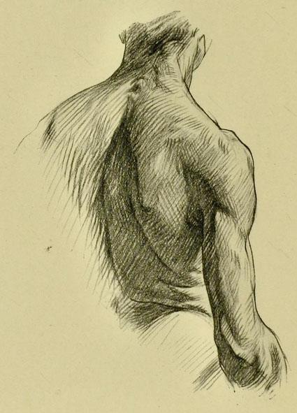 anatomia-humana-para-artistas-parte-posterior-del-cuello-tronco-y-brazo
