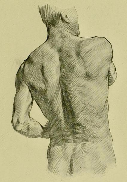 anatomia-humana-para-artistas-relieve-muscular-espalda-nalga-y-cuello