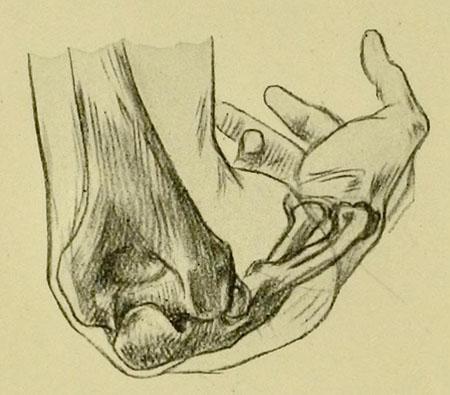 anatomia-humana-para-artistas-huesos-fomrando-la-articulacion-del-codo-vista-trasera