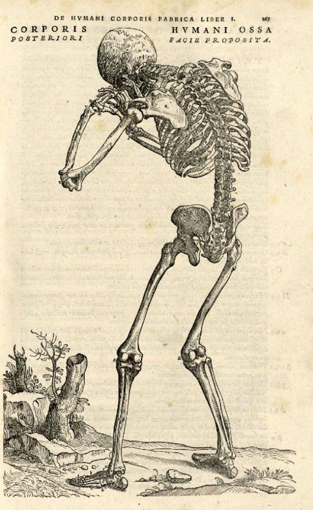 de-humani-corporis-fabrica-page-165
